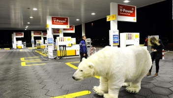 Osos polares, amenazados por planes de extracción en Alaska