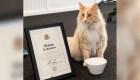 """""""Mittens"""", el gato nominado como el neozelandés del año"""