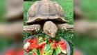 Solomon, la tortuga que volvió a casa tras 74 días de fuga