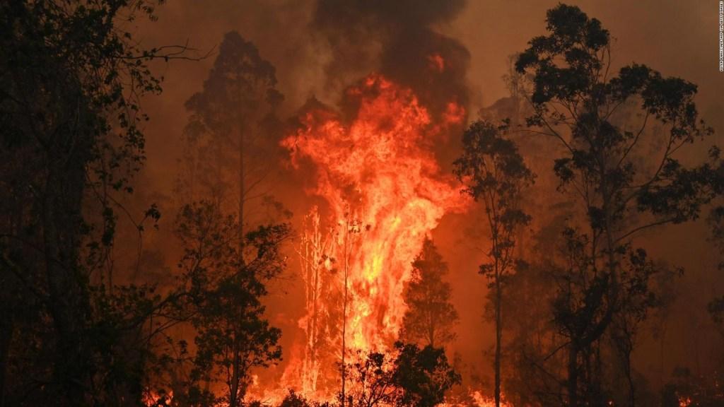 Los países con mayor deforestación de su selva tropical