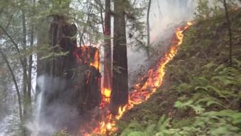 Incendios en California queman medio millón de hectáreas