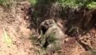 Rescatan a un elefante bebé en Sri Lanka
