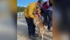 Kerith, la perra que apoya a los bomberos de California