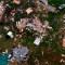 Imágenes aéreas muestran la destrucción que causó Laura