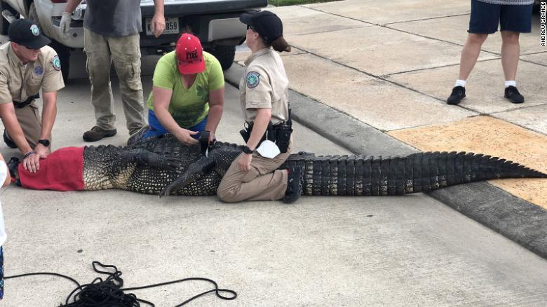 Cuando un caimán de 3,5 metros se acercó a su hija de 4 años, este papá entró en acción