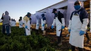 Congresista Raúl Ruiz: La comunidad agrícola es la más afectada y la más vulnerable por el covid-19