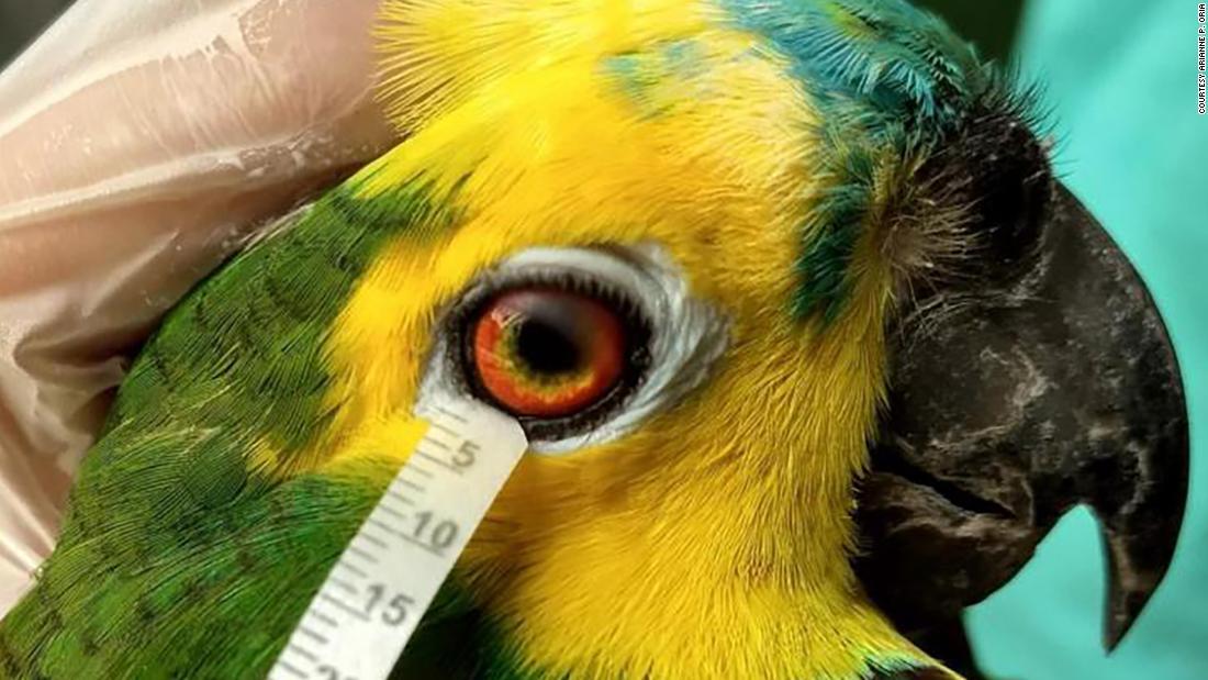 Las aves y los reptiles tienen lágrimas similares a las de los humanos, según estudio