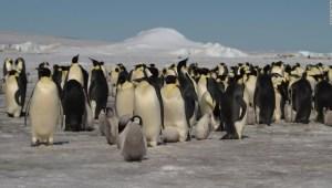 pinguinos-antartida