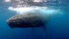 Bombardeos acústicos, un riesgo para las especies del mar argentino
