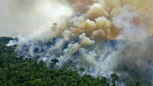 ¿Está el Amazonas a salvo en manos de Bolsonaro?