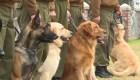 Chile entrena perros para detectar el covid-19