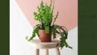 """5 consejos de """"El señor de las plantas"""" para cuidar tus matas"""