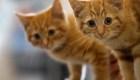 5 categorías para dueños de gatos