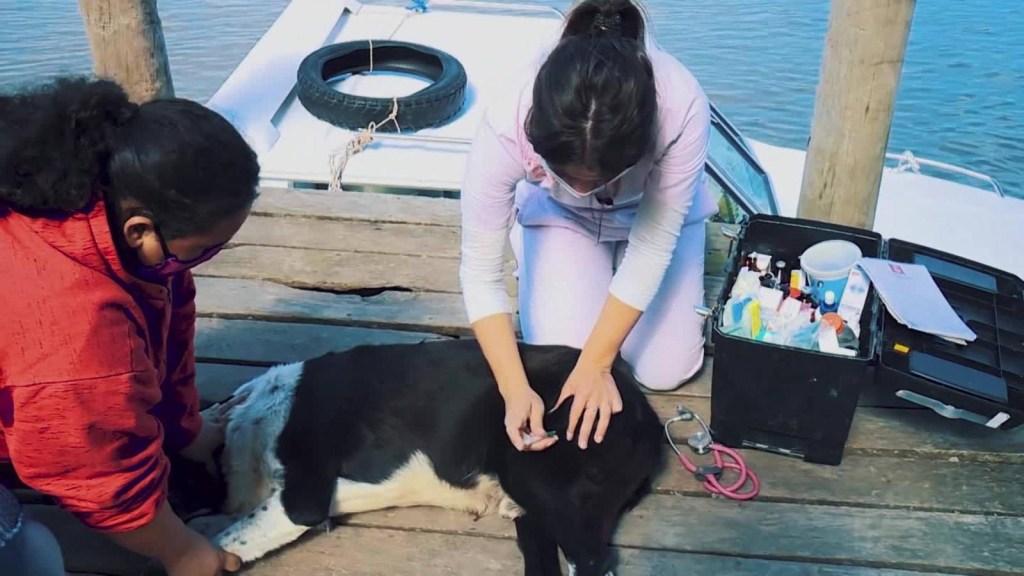 Una veterinaria en lancha: amor por los animales y el río