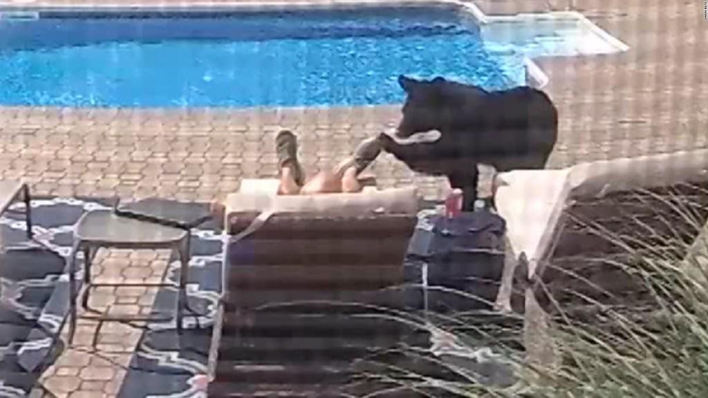Captan a oso en un jardín mientras un hombre dormía