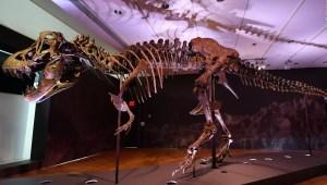 El dinosaurio más completo del mundo está en venta