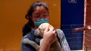 Crisis por covid-19 dio un hogar a perros de la calle