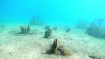 Biólogos advierten de una posible epidemia bajo el mar