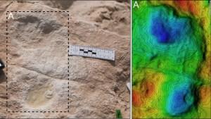 Hallan huellas fosilizadas de hace 120.000 años