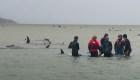 Aparecen otras 200 ballenas varadas en Australia