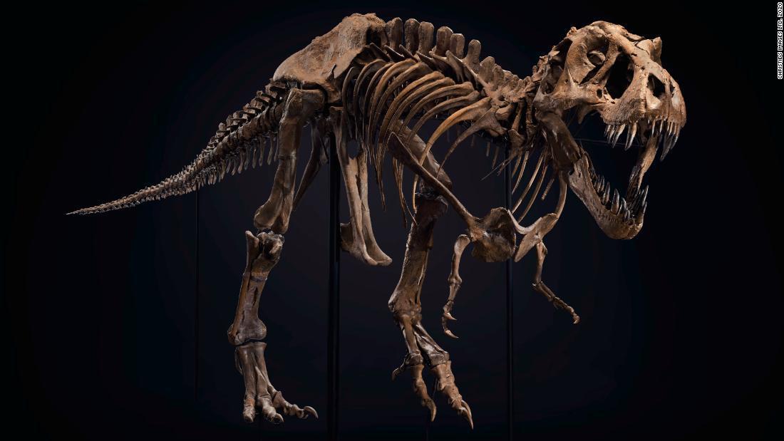 ¿Quieres comprar un dinosaurio? Uno de los esqueletos de Tyrannosaurus rex más grandes del mundo está a la venta
