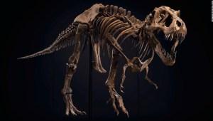 Tyrannosaurus-rex-subasta
