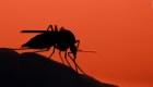 Se insta a los habitantes de Michigan a permanecer en el interior mientras los funcionarios se apresuran a detener la propagación de una peligrosa enfermedad transmitida por mosquitos