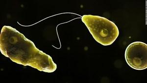 8 ciudades de Texas fueron alertadas sobre una ameba devoradora de cerebros encontrada en el suministro de agua