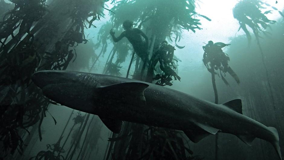 fauna-submarina-sudáfrica-2