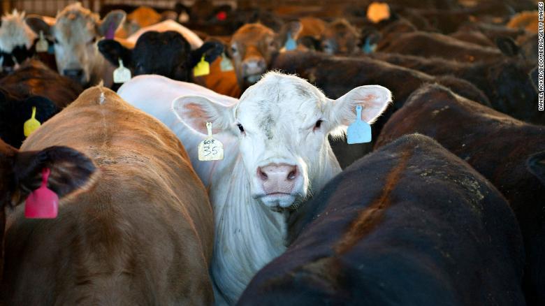 vacas metano gases cambio climatico
