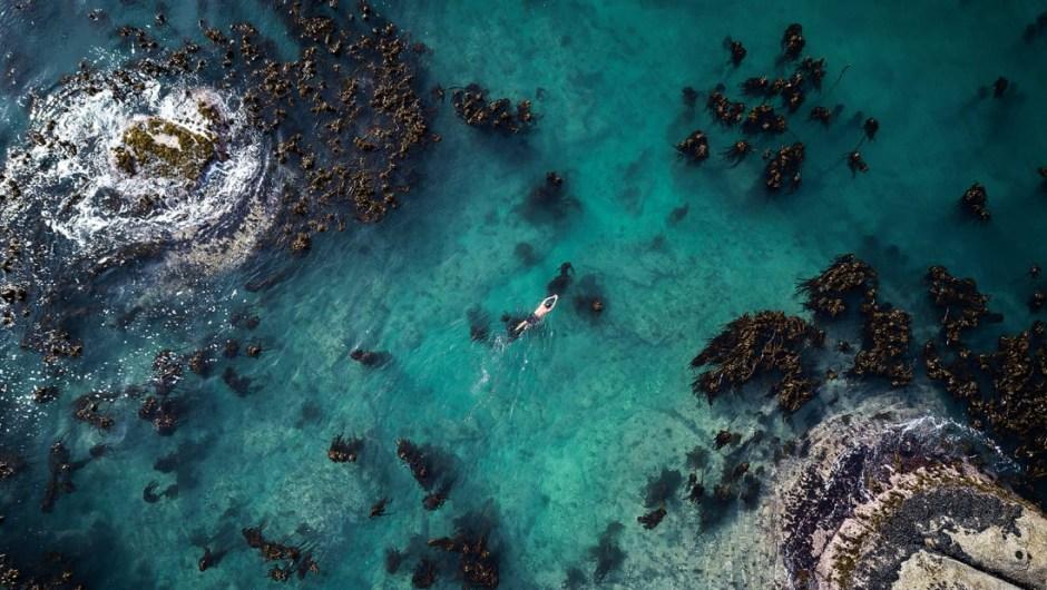 vida-marina-sudáfrica-1