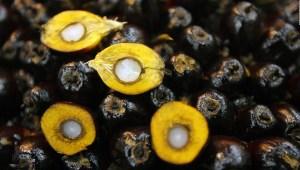 EE.UU. restringe importación aceite de palma de Malasia