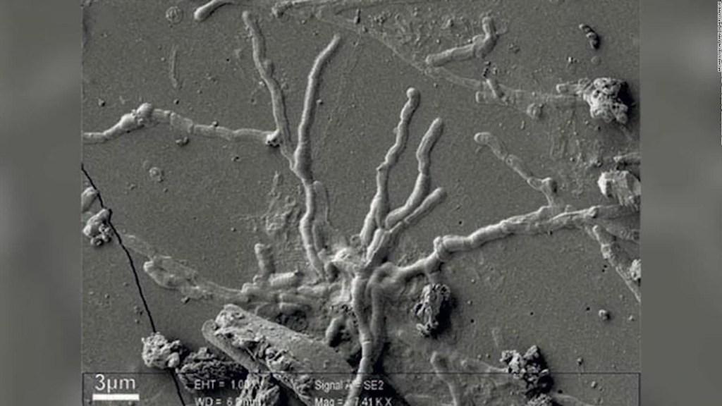 Hallan células cerebrales intactas de hace casi 2.000 años