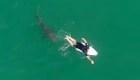 Video muestra a un tiburón nadando cerca de un surfista