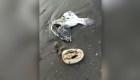 Rusia: hallan animales muertos por contaminación en costa