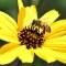Un nuevo aliado para las abejas