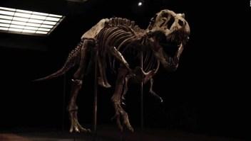 Pagan US$ 31 millones por este Tyrannosaurus rex