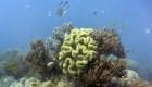 Estudio: coral en Australia disminuye con crisis climática