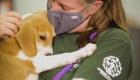Rescate de animales abandonados continúa pese a pandemia