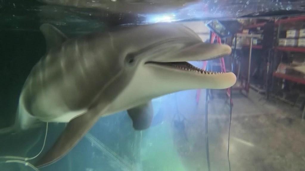 Delfines robot reemplazan animales en cautiverio
