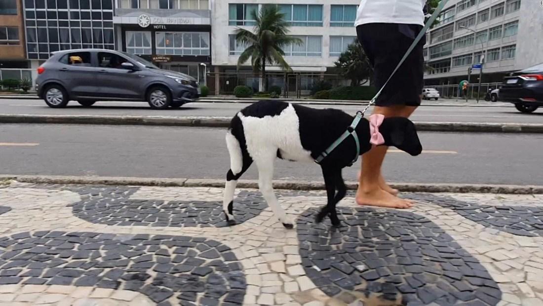 Rebeca, la oveja que es una celebridad en Ipanema