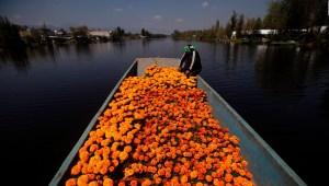 Cempasúchil, la flor que adorna el Día de Muertos