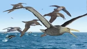 Estos fósiles serían del ave más grande de la prehistoria