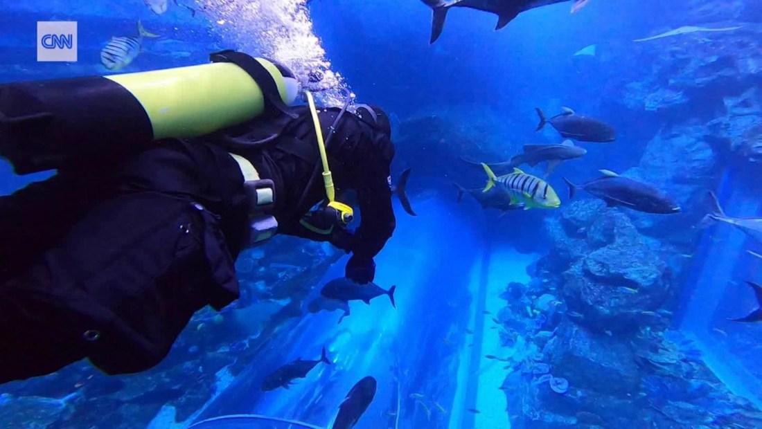 Así es nadar en un acuario dentro de un centro comercial