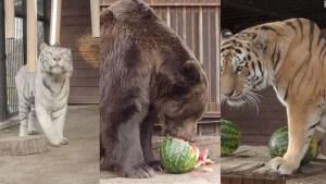 Animales de zoológico predicen a ganador de elecciones