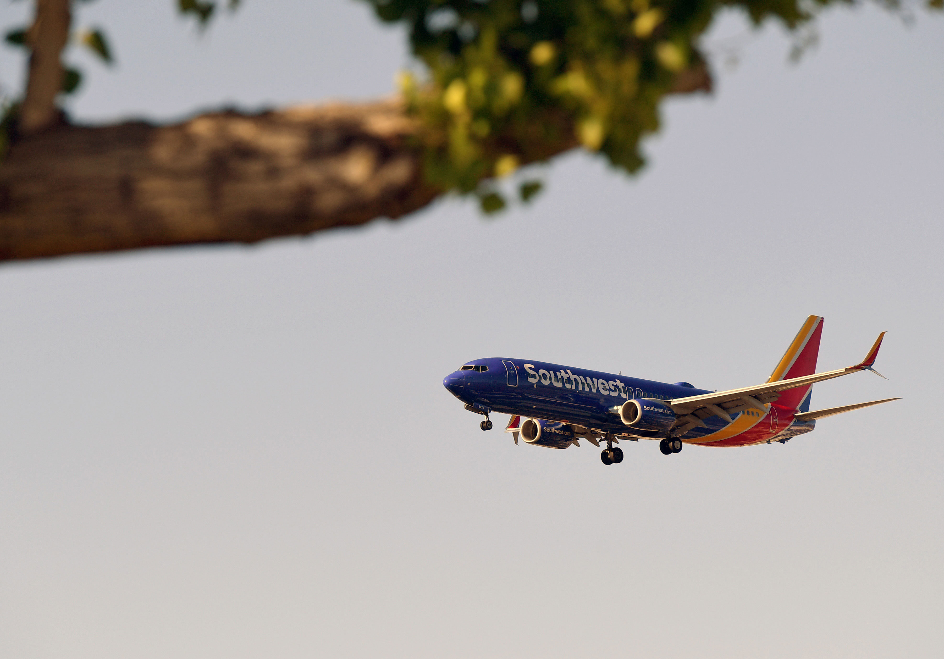 LAS VEGAS, NEVADA - MAY 25: A Southwest Airlines jet is shown behind a tree branch at Sunset Park as it comes in for a landing at McCarran International Airport on May 25, 2020 in Las Vegas, Nevada. The nation's 10th busiest airport recorded a 53% decrease in arriving and departing passengers for March compared to the same month in 2019, a drop of more than 2.3 million travelers, as the COVID-19 pandemic impacts the travel industry. (Photo by Ethan Miller/Getty Images)