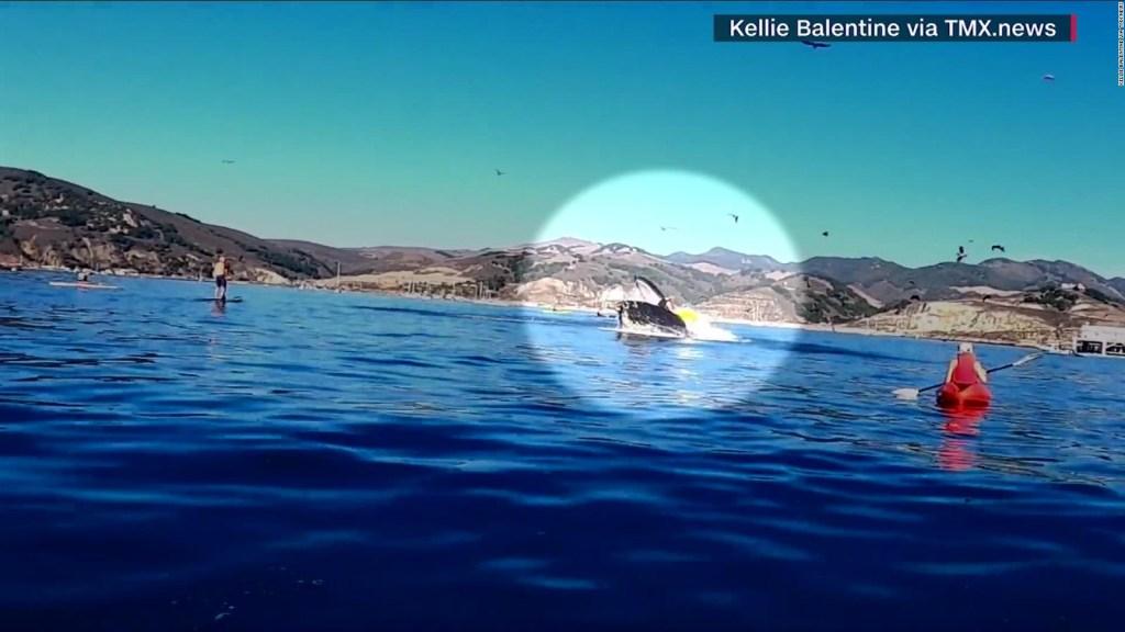 Ballena jorobada arroja a dos mujeres al agua