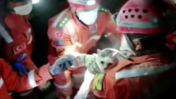 Gato sale con vida bajo escombros de un terremoto