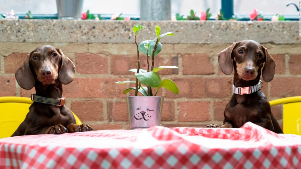 Nestlé wants your pet to eat insects to help protect the planet