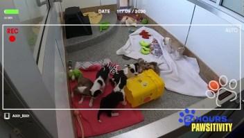 Amazon lanza maratón de videos de perros
